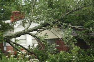 tree-fall-on-house