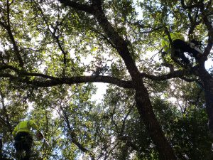 tree-service-round-rock-tx
