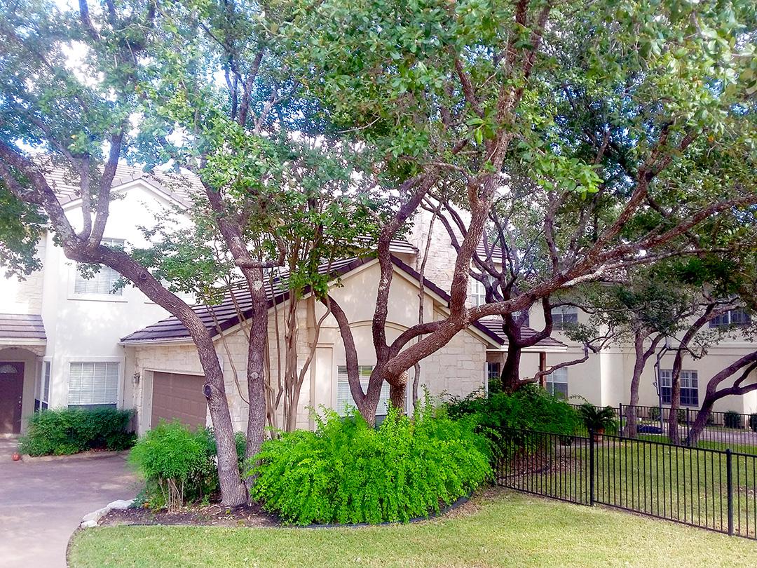 Tree Health Care | Tree Pest Control | Oak Tree Diseases ...